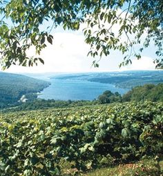 Wineries in the Finger Lakes area of New York - spent a great week in this lovely area a couple years ago