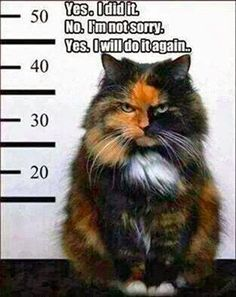 Hmm. A very seriously pissed off kitty. Definitely a frowning kitty, he looks mean. Seriously, like revenge will be sweet!