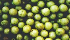 Popular in Ayurvedic medicine, Indian gooseberry is a force to be reckoned with. Otherwise known as amla, this superfruit protects against an impressive list of ailments, many of which are degenerative.  A veritable 'Fountain of Youth,' amla can help keep you sprightly, vibrant and disease-free.   #ayurvedicmedicine #naturalhealing #superfoods #health #naturalhealth
