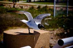 Take Off by elrina753, via Flickr