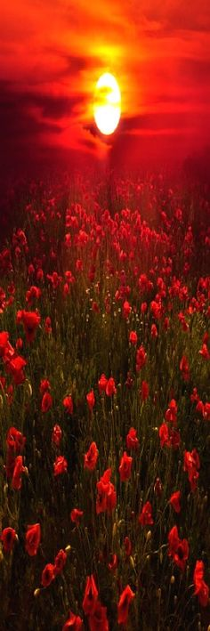 """At the going down of the sun - we will remember them - photo by """"Deep Red"""" Marco Carmassi"""