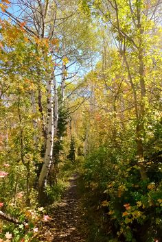 On the trail in early fall (Utah) by The Usual Bliss cr.c.