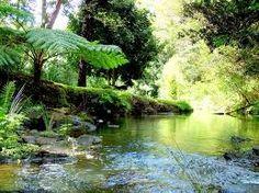 rainforest landscape - Google Search