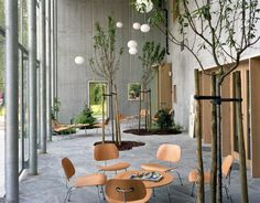 Indoor Trees / An extension of the Charleroi Museum of Photography in Belgium was built on the grounds of a former orchard; indoor trees seemingly pay tribute to the land's former use