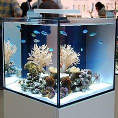 Elos 20 Gallon System Mini Aquarium & Cabinet Stand (e-Lite Not Included) - For the first time aquarium lovers seeking a small complete system can have a system designed and built to the highest standards. The beautiful ELOS SQUARE cabinet holds our ELOS
