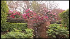 A must see garden made at the top of Mount Dandenong where a maze of stone walls and jewel like garden rooms are set within woodlands of magnificent and hist. Holiday Apartments, Romantic Couples, Melbourne, It's Wonderful, Gardens, Nursery, Australia, Stone Walls, Magnolias