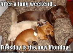 After a long weekend...  Tuesday is the new Monday.