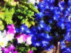 Frühlingsgruß mit Glockenblume, Stiefmütterchen und Ranunkel