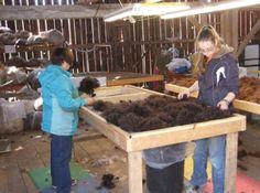alpaca shearing and fleece handling/storage