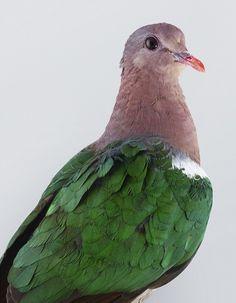 Ornithurae, série photographique d'oiseaux colorés par Leila Jeffreys - Journal du Design