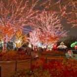 10 ways to experience a classic Christmas in Chicago - Things to Do - Time Out Chicago
