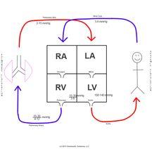 schematic diagram of heart circulation - Google Search
