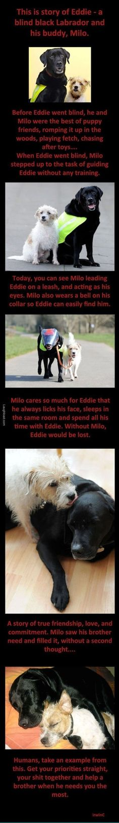 Story of Blind pet and milo