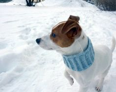 crochet scarf for your dog - Google Search