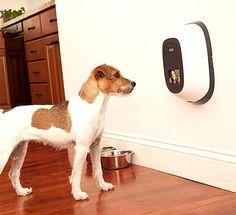 Si vous avez envie d'offrir un truc qui sort de la baballe classique à votre toutou, voici 20 idées de cadeaux originaux pour chien.