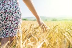 Woman walks in a corn field - Woman walking in a wheat field - Hand of a young girl touching corn ears in a field at sunset