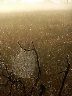 Green shoots: about patterns in nature webs8, taken by #Dave Roberts# on 21 September, 2012 in Thursley, England