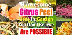 8 Awesome Citrus Peel Uses In Garden