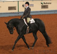 Hunt Seat Equitation- My first & foremost favorite !