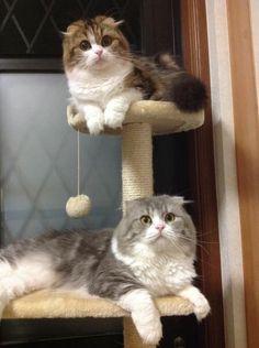 里親さんブログ父と娘〜♪ - http://iyaiyahajimeru.jp/cat/archives/66631