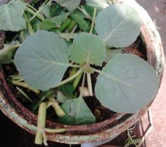 Pemberian Mulsa Plant Leaves, Plants, Tips, Flora, Plant, Counseling