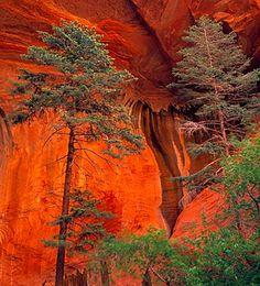 Taylor Creek, Zion National Park, Utah