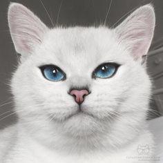 From @cobythecat: Wise beyond my kitten year. #catsofinstagram [source: http://ift.tt/1R78Eta ]