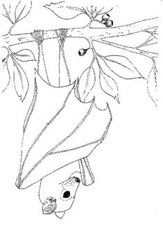 coloring page Bats - Stellaluna