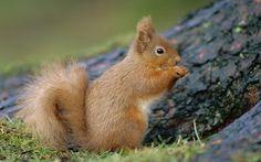 FOTOFRONTERA: Hermosas criaturas en su hábitat natural - Animales