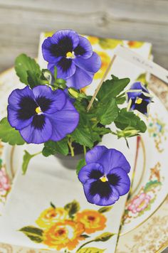 Pansies are one of my favorite flowers. The colors are electric! My favorite hues are indigo and purple – but you could use any color for these mini-favor pots. You can purchase a flat of pansies for around $12; that will give you 32 DIY wedding favors! Your only other expense is the flower pots. …