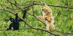 Par Aude Vidal À Bornéo, la disparition de la forêt tropicale est autant une préoccupation environnementale qu'une question de subsistance pour les populations autochtones. Reportage sur la partie malaisienne de l'île, dans l'état du Sarawak. « Ils arrivent...