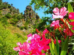 Walking Round Trip on Crete greece Crete Greece, Round Trip, Hiking, Mountains, Plants, Crete Holiday, Tours, Plant, Bergen