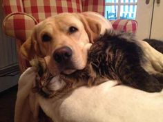 GAH nothing is as cute as a best friend pillow! | 21 Cuddly Cat And Dog Best Friends To Make You Squee