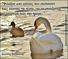 Picture Quotes, Love Quotes, Feeling Loved Quotes, Greek Quotes, Poems, Wisdom, Feelings, Pictures, Angel
