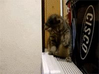 Cat sitting on an air vent...