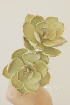 Gumpaste succulents by Elysia Smith, Steel Penny Cakes