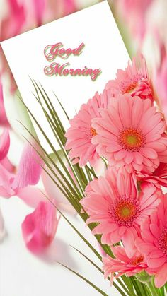 Positive Have A Beautiful Day Quotes Good Morning Images Flowers, Good Morning Roses, Good Morning Beautiful Quotes, Good Morning Cards, Morning Morning, Good Morning Picture, Good Night Image, Good Morning Messages, Good Morning Greetings