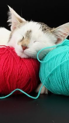 Kitten napping on clews