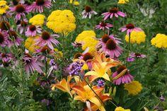 Einen Gräser Garten anlegen: Pflanzplan für trockene Böden