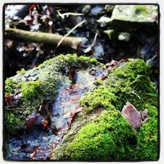 Waldspaziergang Herbs, Nature, Naturaleza, Herb, Nature Illustration, Off Grid, Natural, Medicinal Plants