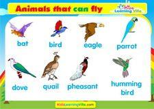 Birds vocabulary video