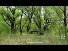 Meditation Music, New Age, Reiki, Totalement, Nature, Wellness, Sport, Music For Relaxation, Musica