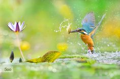 Photograph ~ A Decisive Moment ~ by FuYi Chen on 500px