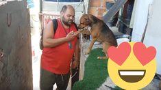 """Cachorro """"pede benção"""" ao dono todo dia quando ele chega do trabalho"""