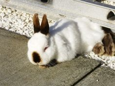 Bunny Naps in the Sunshine - August 13, 2011