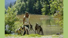 Urlaub mit Hund rund um den Präbichl, Region Eisenerz, Steiermark Seen, Strand, Boston Terrier, Dogs, Animals, Tricks, Bungalow, Iron Ore, Vacation Places