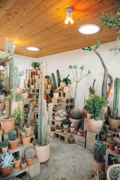 Inside Cactus Store in Echo Park, Los Angeles — California — Haarkon Adventures is part of Cactus plants California, it seems, is littered with incredible plant shops - Les Succulents Cactus, Planting Succulents, Planting Flowers, Succulent Planters, Hanging Planters, Indoor Cactus Garden, Indoor Plants, Cactus Garden Ideas, Indoor Herbs