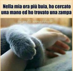 Amore che solo un animale può dare. 5 Best Friends, Dog Friends, Intelligent Words, Cat Quotes, Animal Totems, Fluffy Cat, I Love Cats, Animals And Pets, Cats And Kittens