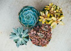 how to build a succulent planter