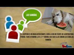 Mira frutas y verduras para perros que puede comer saludables - YouTube